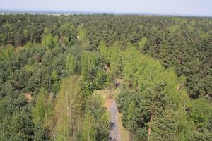Umgeben ist der Felixsee von viel Wald.